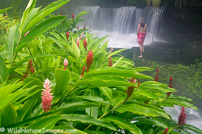 Tabacon Hot Springs, Arenal, Costa Rica.