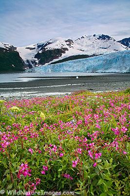 Harriman Glacier, Alaska.