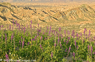 Carrizo Badlands Overlook in Anza-Borrego Desert State Park, California.