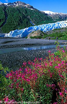 Exit Glacier, Kenai Fjords National Park, Alaska.