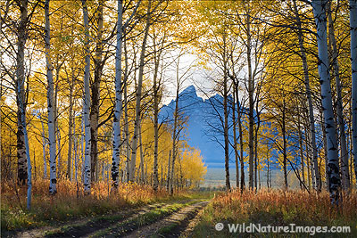 Teton Photo Gallery