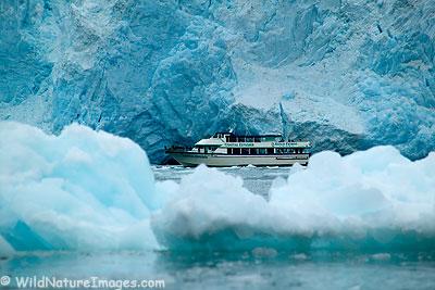 Kenai Fjords Natoinal Park Boat Tours