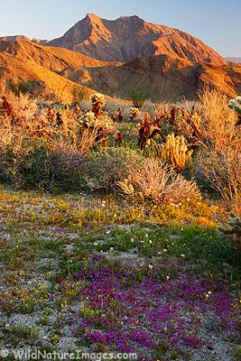 Hellhole Canyon Wildflowers