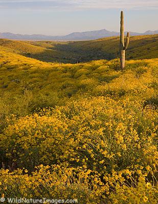 McDowell Mountain Regional Park Photos