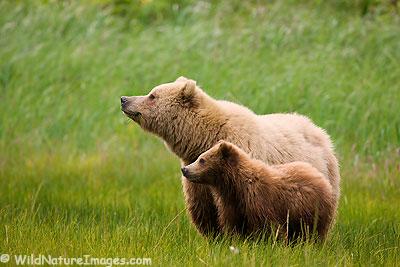 Alaska Costal Bear Viewing