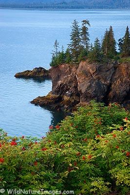 Kachemak Bay, Alaska