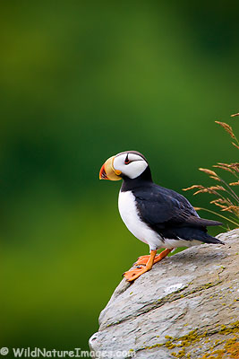 Puffin Photos
