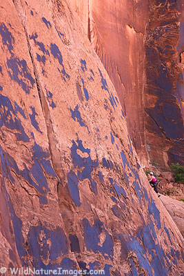 Climbing in Moab.