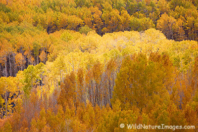 Dixie National Forest during Autumn, Utah.