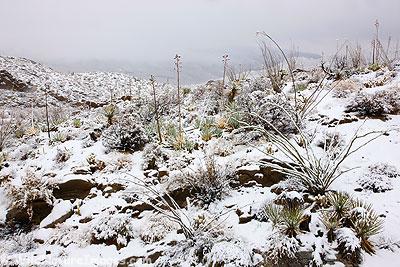 winter desert