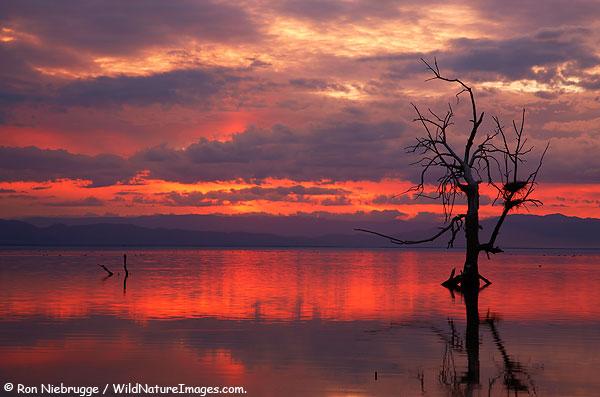 Sonny Bono Salton Sea National Wildlife Refuge, California.