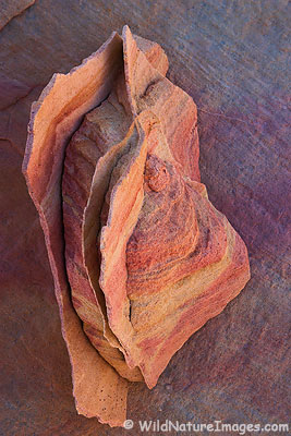 An interesting rock, Valley of the Fire State Park, Nevada.