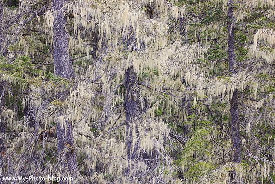 Rainforest, Chugach National Forest, Alaska.
