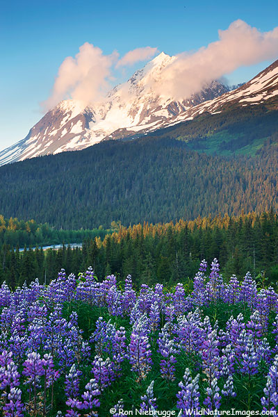 Paradise Peak, Chugach National Forest, Alaska.