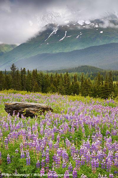 Snow River Valley, Chugach National Forest, Alaska.