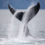 Whale Tails and Travel Plans