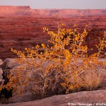 Autumn, Canyonland National Park