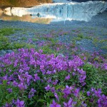 Kenai Fjords Photo Tour