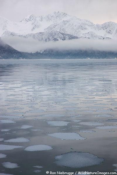 Ice flows on Resurrection Bay, Seward, Alaska.