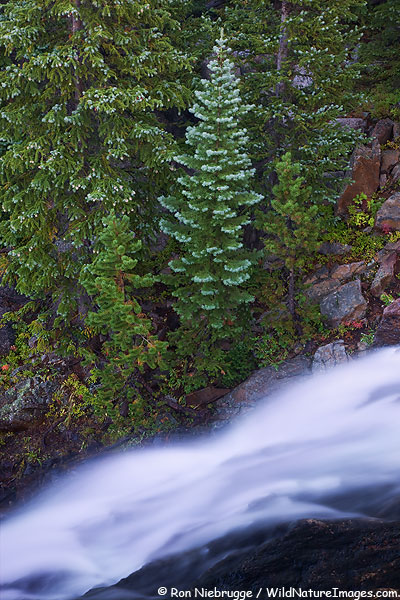 Alberta Falls, Rocky Mountain National Park, Colorado.