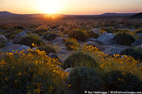 Yesterday's sunrise, Anza-Borrego Desert State Park, California.