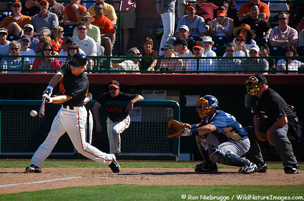 Buster Posey of the San Francisco Giants during Spring Training, Scottsdale, Arizona.