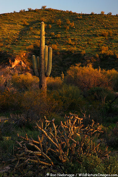 McDowell Mountain Regional Park, Arizona.