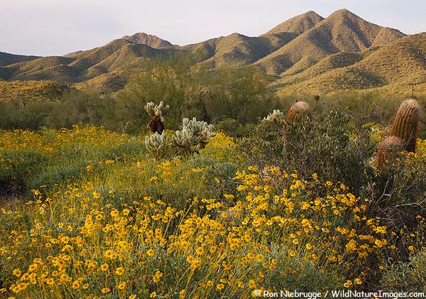 McDowell Sonoran Preserve, Scottsdale, Arizona.