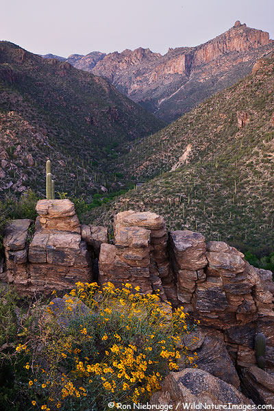 Sabino Canyon, Tucson, Arizona.