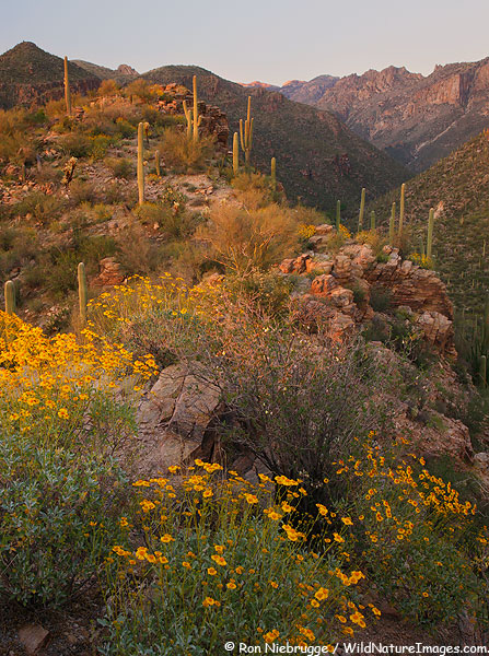 Sabino Canyon, near Tucson, Arizona and about an 45 minutes before a dark hike down this same hillside.