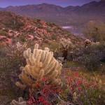 Phoenix Photos