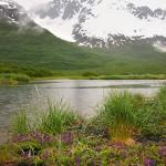 Aialik Landscapes