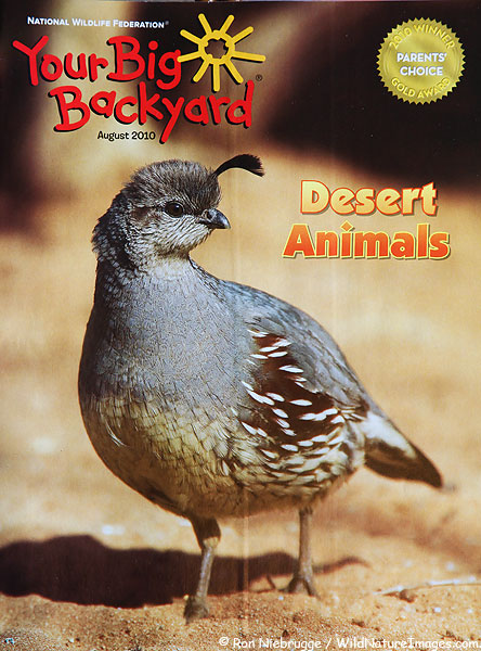Your Big Backyard magazine cover!