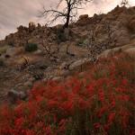 Pioneertown Mountain Preserve