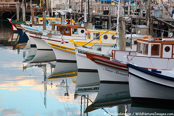 Boats fishermans wharf photo blog niebrugge images for Fishing store san francisco