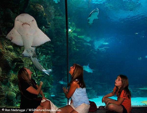 Visitors enjoying Shark Reef, Mandalay Bay, Las Vegas, Nevada.