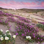 Anza-Borrego Photo Workshop