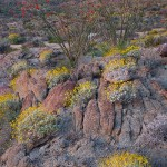 Anza-Borrego Workshop Update