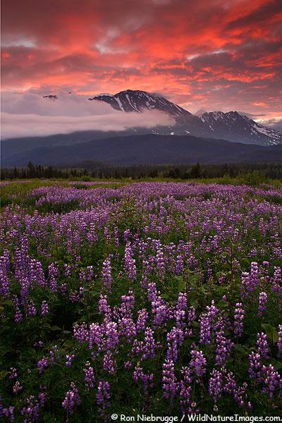 Chugach National Forest near Seward, Alaska.