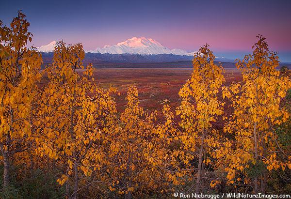 Mt McKinley, Denali National Park, Alaska.