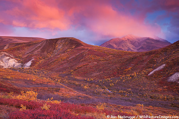 Sable Pass, Denali National Park, Alaska.