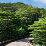 Rain Forest Highway