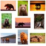 Picking an Alaska Bear Photo Tour