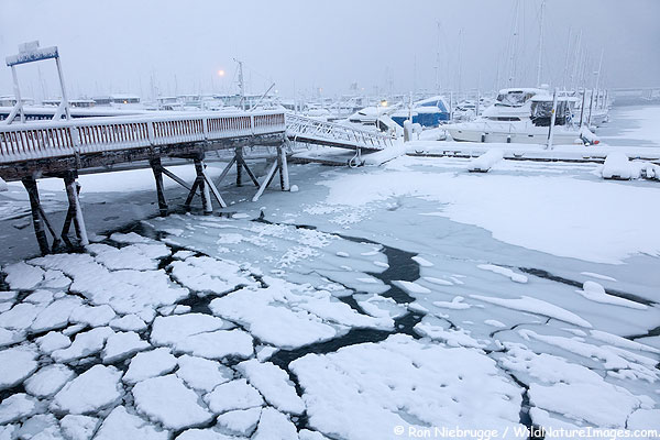 Seward Boat Harbor during a snowstorm yesterday, Seward, Alaska.