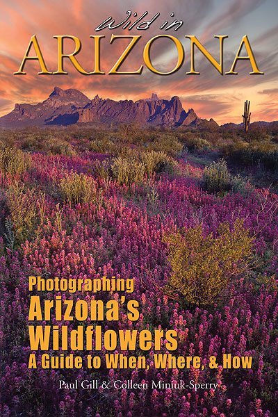 Wild in Arizona - a guide to photographing Arizona's wildflowers.