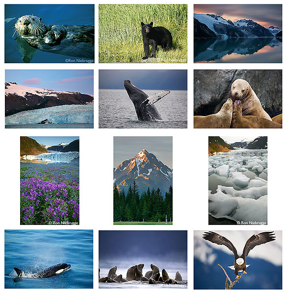 Photos all from Kenai Fjords National Park and / or Seward, Alaska.