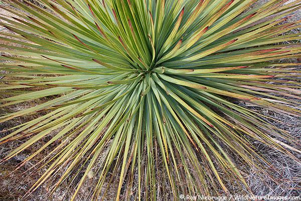 Anza-Borrego Desert State Park, Arizona.
