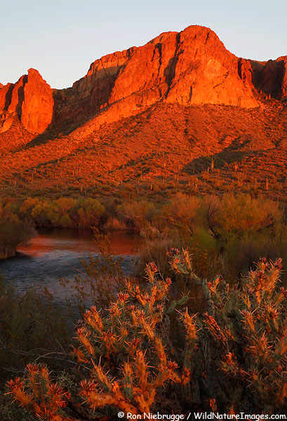 Salt River, Tonto National Forest, Arizona.