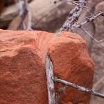 Can a tree cut a rock?