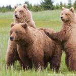 Bears Close!